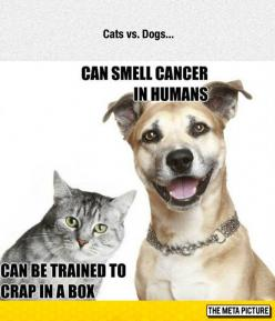 Dogs And Cats, The Eternal Rivalry