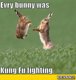 Every Single Bunny