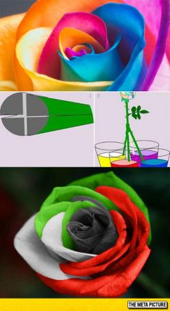 How To Easily Make A Multicolored Rose