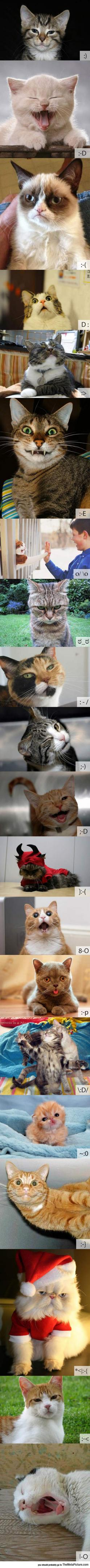 If Cats Were Emoticons