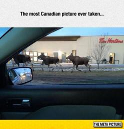 It Doesn't Get Any More Canadian Than This
