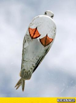 Just A Seagull On A Glass Roof