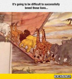 Noah's Ark Overlooked Problem