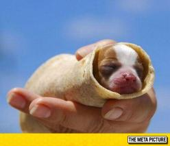 Probably The Cutest Burrito Ever