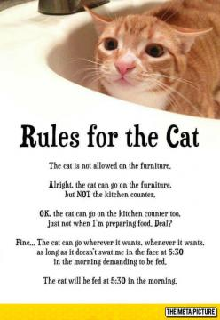 Rules For Every Cat