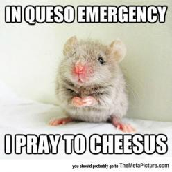 The Holy Mouse