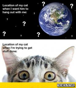The Location Of My Cat