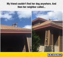The Roof Husky Is The Most Mysterious Of The Breed