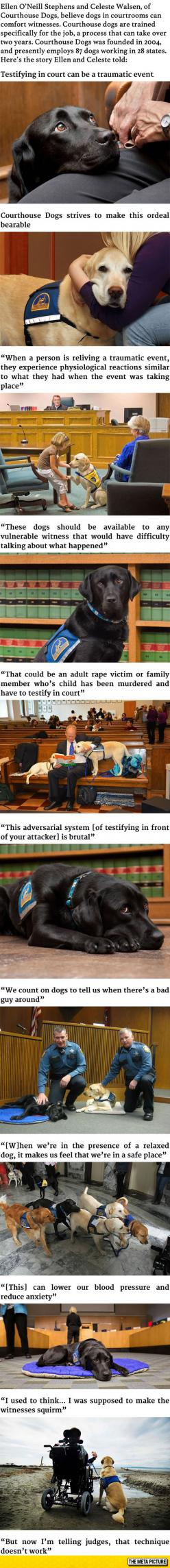 These Courthouse Dogs Are Trained to Comfort Witnesses in Courtrooms