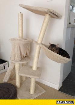 This Cat Is Too Heavy For His Kitty Tower