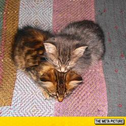 This Heart Is Made Of Kittens