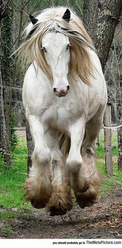 This Horse Is Marvelous