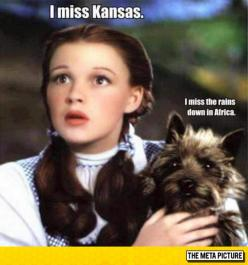 What About You Toto?