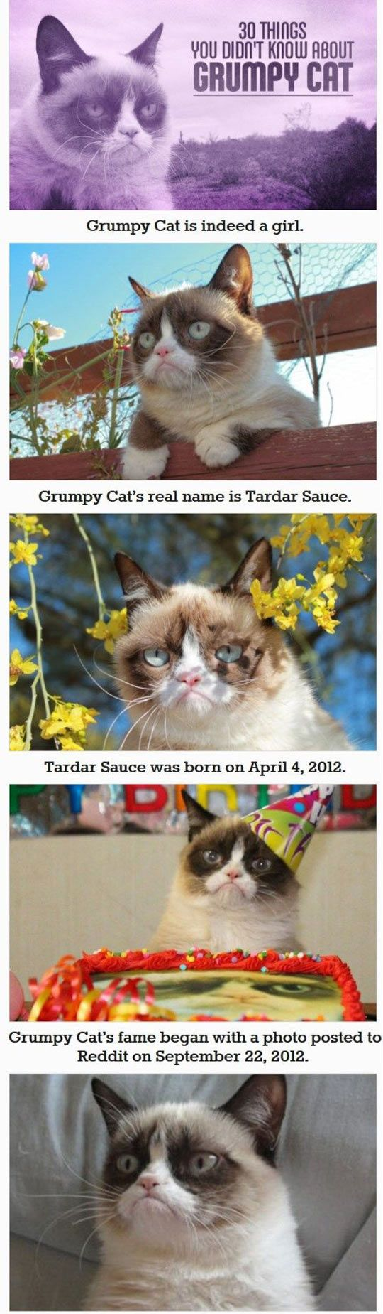 30 things you didn't know about grumpy cat… Okay, so I knew some of these... Adorbs.: Grumpy Cat Humor, Grumpy Kitty, Grumpycat, 30 Things, Funny Grumpy Cat, Grumpy Cat Facts, Didnt