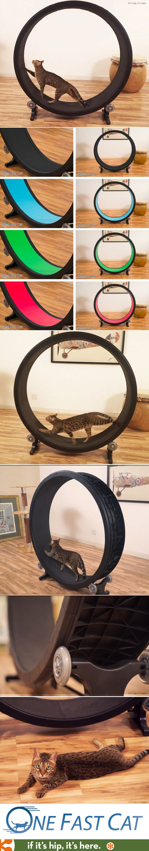 An exercise wheel for Cats! My cat needs one of these! [Would be neat, if mine would actually use it]: Indoor Cat, Furniture Pet, For The Cat, Cat Exercise, Cat Tree, For Cat
