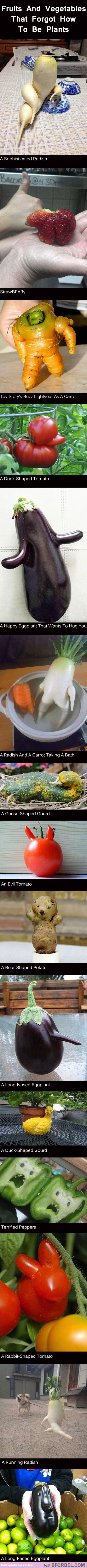 Aw this made my day XD: Forgot They Re, Giggle, They Re Plants, 15 Plants, Funny Vegetables, Funny Stuff, Funny Quotes, Fruits And Vegetables