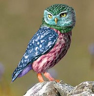 bright owl: Kids Events, Little Owls, Animals, Google Search, Bright Owl, Kid Events, Birds