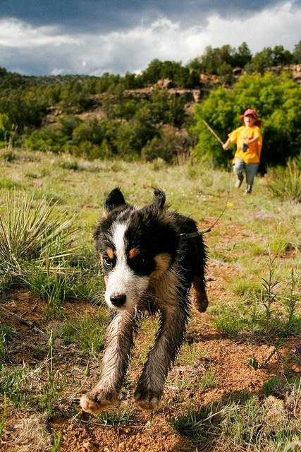 Live like someone left the gate open!: Picture, Dog Park, Cute Photos, Baby Dogs, Baby Animals, Amazing Animals, Boy, Friend