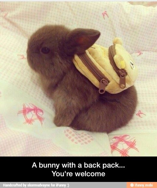 Oh my sweet baby Jesus.  Look, guys.  Just look!  I mean...backpack.  It's wearing it.  I can't even.  I just can't.: Rabbit, Backpacks, Animals, School, Bunny, Adorable, Things, Baby, Bunnies