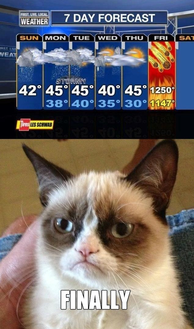 Something tells me Grumpy Cat is going to be grumpier than usual on Saturday: Cats Humor, Grumpy Cat Humor, Grumpy Cat Quotes, Funny Stuff, Even Grumpycat, Animal