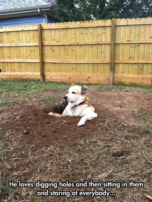 Sup dawg: Animals, Funny Dogs, Funny Picture, Puppy, Dig Holes, Funny Animal, So Funny
