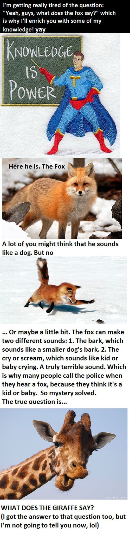 What the fox really says...: Prayer, Giggle, Humorous Meme, Fox Memes, Foxes Don T, Smile, Funny Memes