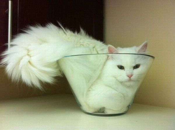 """""""If I fits in it, I sits in it."""": Cats, Fit, Animals, Cat Bowl, Funny, Crazy Cat, Kitty, Bowls, White Cat"""