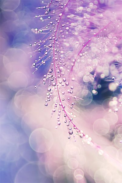 """""""Microlight"""" by ^impressionenmeer on deviantart. Click the picture to see more water drop macro photography collected by Designzzz.: Water Drops, Purple, Macro Photography, Color, Dewdrops, Dew Drops, Rain Drops, Water Droplets"""