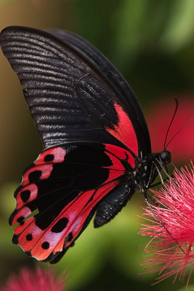 """""""The caterpillar does all the work but the butterfly gets all the publicity."""" __George Carlin: Beautiful Butterflies, Animals, Red, Nature, Color, Flutterby, Moth"""