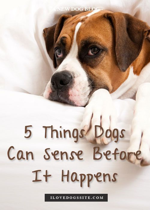 5 Incredible Things Dogs Sense Before They Happen - #5 is so true! Grizzly was my shadow right before I went into labor with El.: Doggie, Incredible Things, Pet, Things Dogs, Dogs Sense, Amazing Things, 3D Animal, Animal Face, Friend
