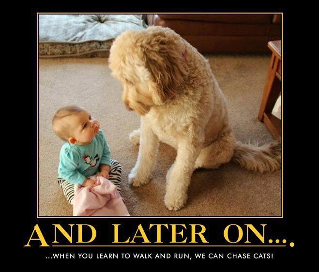 And later on...when you learn to walk and run, we can chase cats!: Cat, Animals, Dogs, Pet, Funny, Baby, Friend, Kid