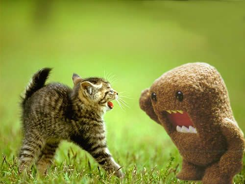 ...and that's when the fight started!: Cats, Animals, House With, Funny Stuff, Funnies, Funny Animal, Things, Kittens, Kitty