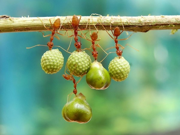 Ants Holding Seeds Photo by Eko Adiyanto (Bekasi, Indonesia): Photos, Holding Seeds, Animals, Nature, Ants Holding, Photography
