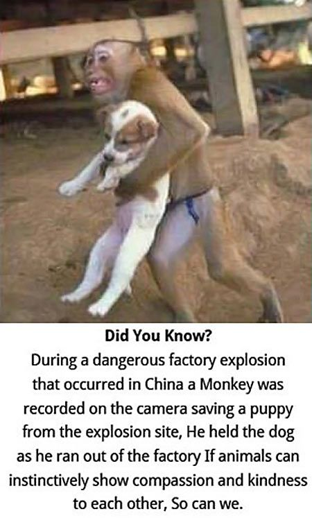 AWW!: Animals, Dogs, Monkey Saves, Stuff, Pet, Puppys, Animal Rescue Quote, Things, Funny Animal