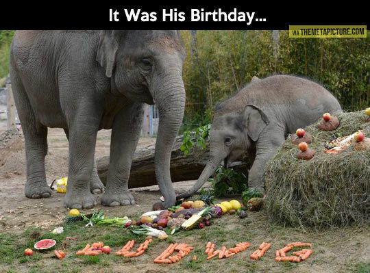 Baby elephant birthday party…: Babyelephants, Animals, Happy Birthday, Birthday Parties, Baby Elephants, Birthdays, Elephant Birthday, Birthday Party