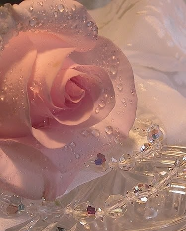 Beautiful pink rose and jewels. #roses #flowers: Beautiful Flower, Pink Roses, Dew Drops, Things, Flowers, Beautiful Rose, Pretty, Flower