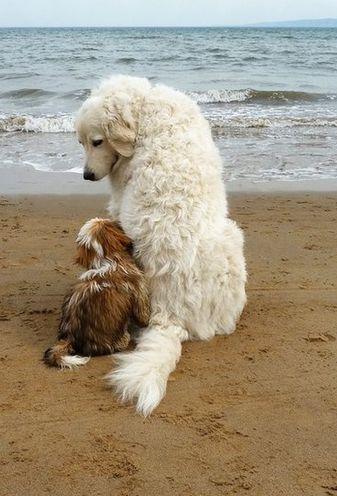 """BJ wrote: """"One of the sweetest doggy pictures I have seen in a long time. Gentle, kind and caring. As the 'wee one' seems somewhat afraid. The older more experienced dog seems to know that a great deal of comfort is needed. Humans can learn a"""