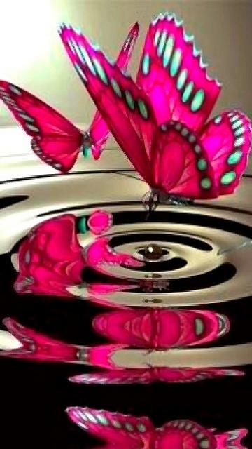 Butterflies: Pink Butterfly, Beautiful Butterflies, Color, Animal