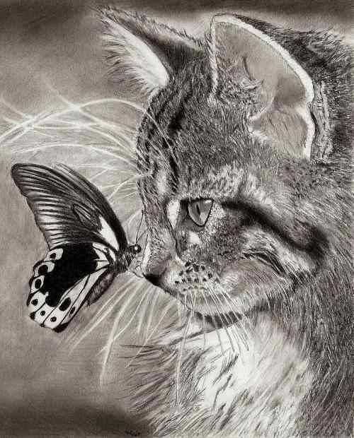 Butterfly kisses: Cats, Butterfly, Drawings, Animals, Butterflies, Art, Pencil Drawing, Kitty, Photo