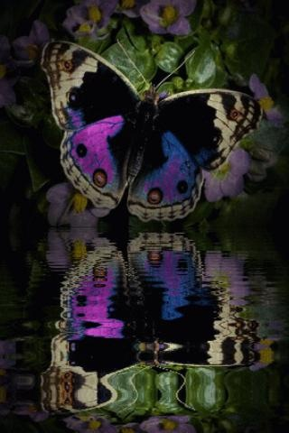 butterfly - SO ABSOLUTELY DIVINE!! - IT IS HARD TO BELIEVE IT WON'T BE ALIVE FOR VERY LONG - SO SAD!! ⭕️: Beautiful Butterflies, Butterflies Dragonflies, Beautiful Pins, Flutterby, Butterflys Beautiful, Butterfly Reflections, Beautiful Photography, Be