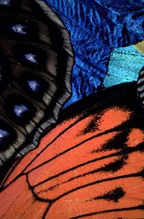 butterfly wings: Nature Pattern, Animal Texture