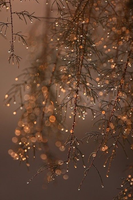 Can't wait till all the trees are like this.: Winter Wonderland, Beautiful, Christmas, Dew Drop, Things, Sparkle, Nature S, Light, Photography