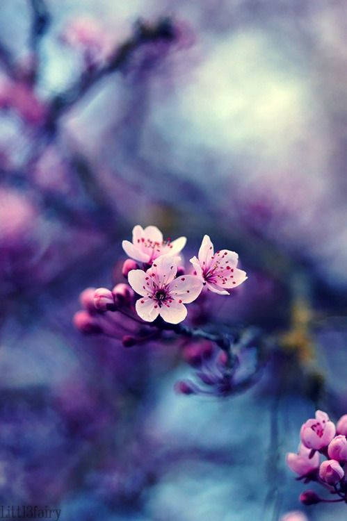 color palate for a grown up bedroom.  Probably for after I am widowed since my husband would rather set himself on fire than have a pink and purple bedroom: Spring Blossom, Nature, Pink Blossom, Beautiful, Sakura, Flowers, Garden, Photo, Cherry Blossoms