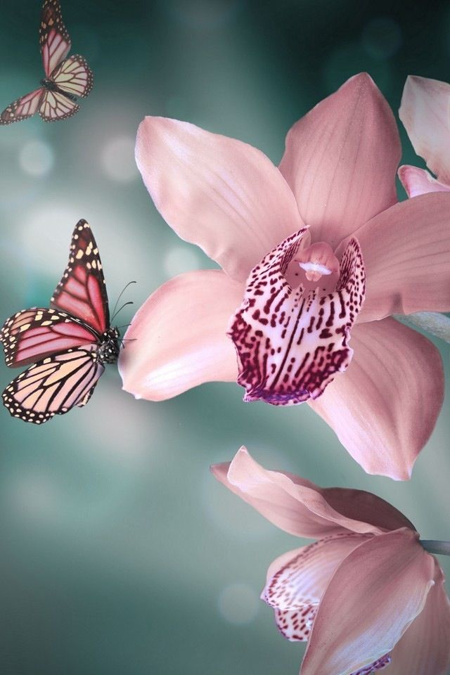 Consciousness has an interface if in harmony in the world, resulting in healthy biology. -Bruce Lipton: Amazing Flower, Beautiful Flowers Nature, Beautiful Nature Flowers, Flutterby, Orchid Tattoo, Pink Orchids