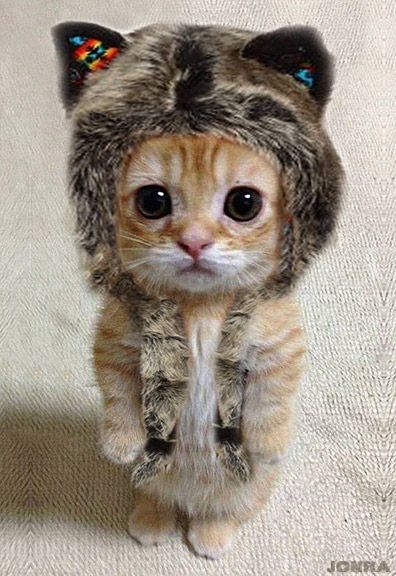 Cutest thing I have ever seen and I have seen super cute things O.O: Cats, Animals, So Cute, Pet, Funny, Kittens, Kitty, Has
