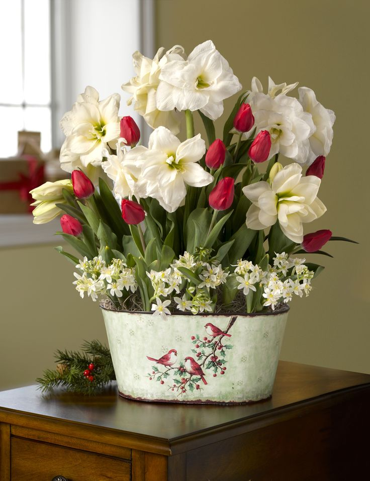 Deluxe Christmas Morning Blooms: Amaryllis, Tulips & Star of Bethlehem: Gift Baskets, Morning Blooms, Christmas Morning, Tulip, Star, Flowers, Deluxe Christmas