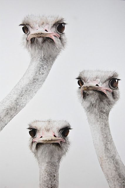"Disapproving Ostriches (it is actually titled ""Still Checking"", by wildlife artist Dominique Salm): Animals, Duckface, Emu, So Funny, Disapproving Ostriches, Birds, Photo"