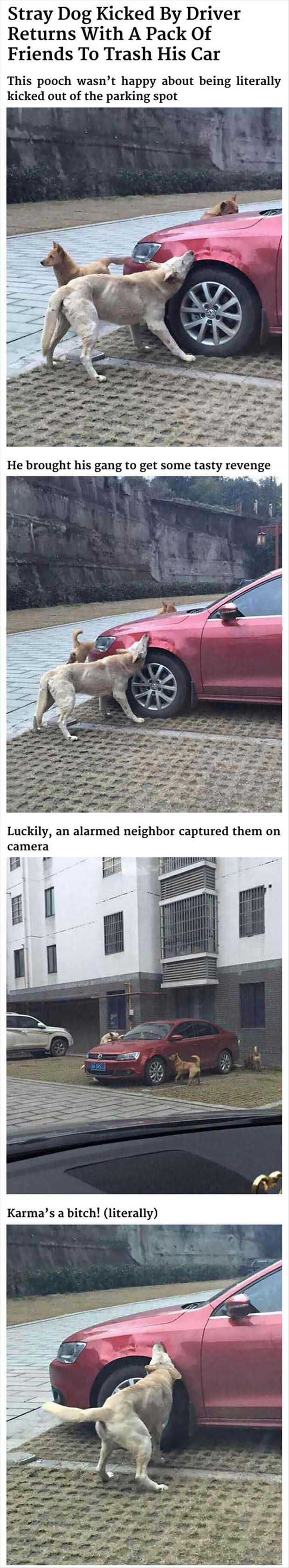 Dog Gets Revenge On Man Who Kicked Him - 4 Pics: Awesome Dogs, Revenge, Funny Stuff, Humor, Boys Funny, Cute Funny Dogs, Man
