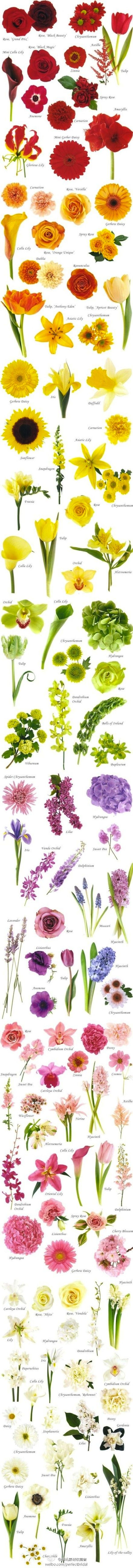 Don't know your carnations from your chrysanthemums? Let this fabulous guide help you to identify your favourite flowers, introduce you to new ones and inspire you to put together your dream bouquet and wedding flower arrangements. If you're feeli