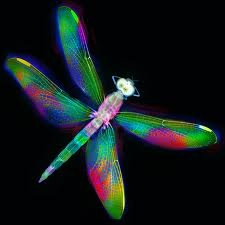 Dragon fly. Reminds me of our wedding and honeymoon. They were all over the entire time <3: Pretty Dragonfly, Dragonfly Art, Animals, Color, Search, Animal Planet, Dragonflies Dragonfly